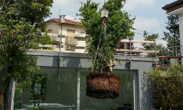 fornitura e posa piante verde blu vicenza