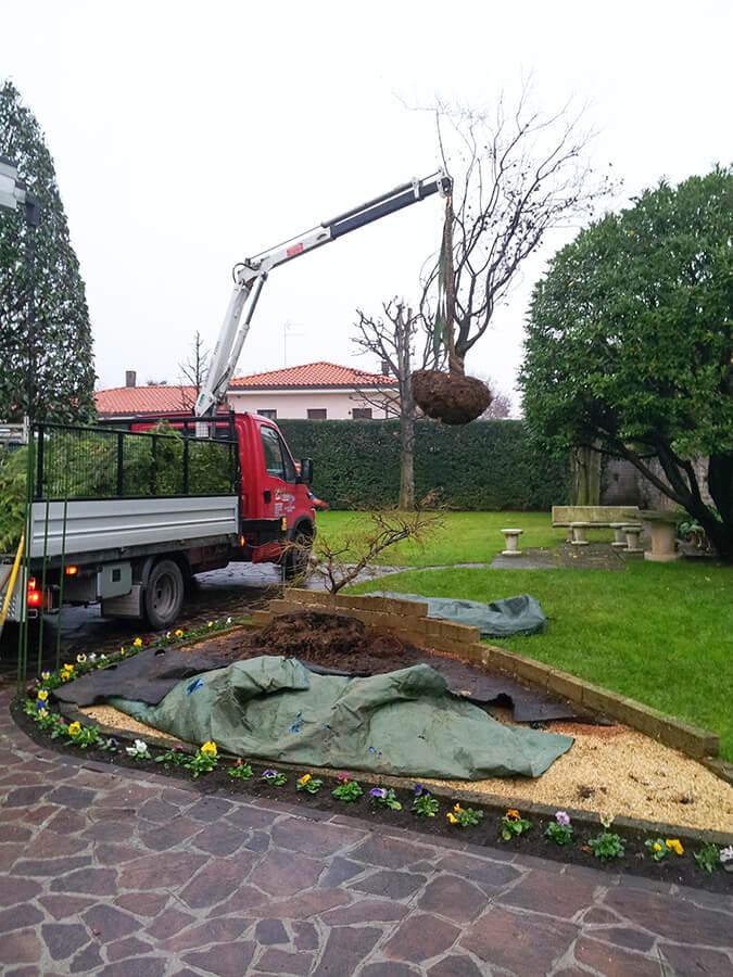 fornitura e posa piante - Verde Blu Giargini - Vicenza 1