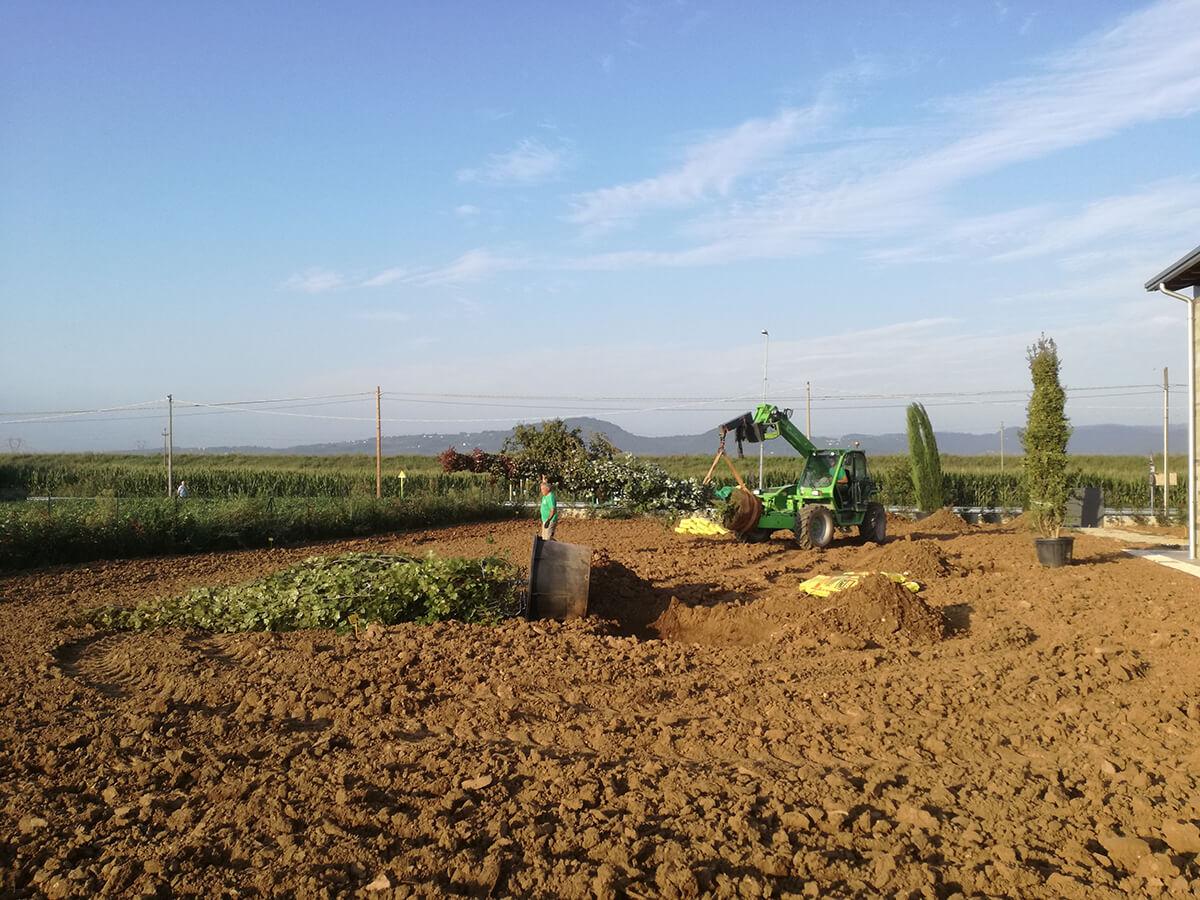 fornitura e posa piante - Verde Blu Giargini - Vicenza 10