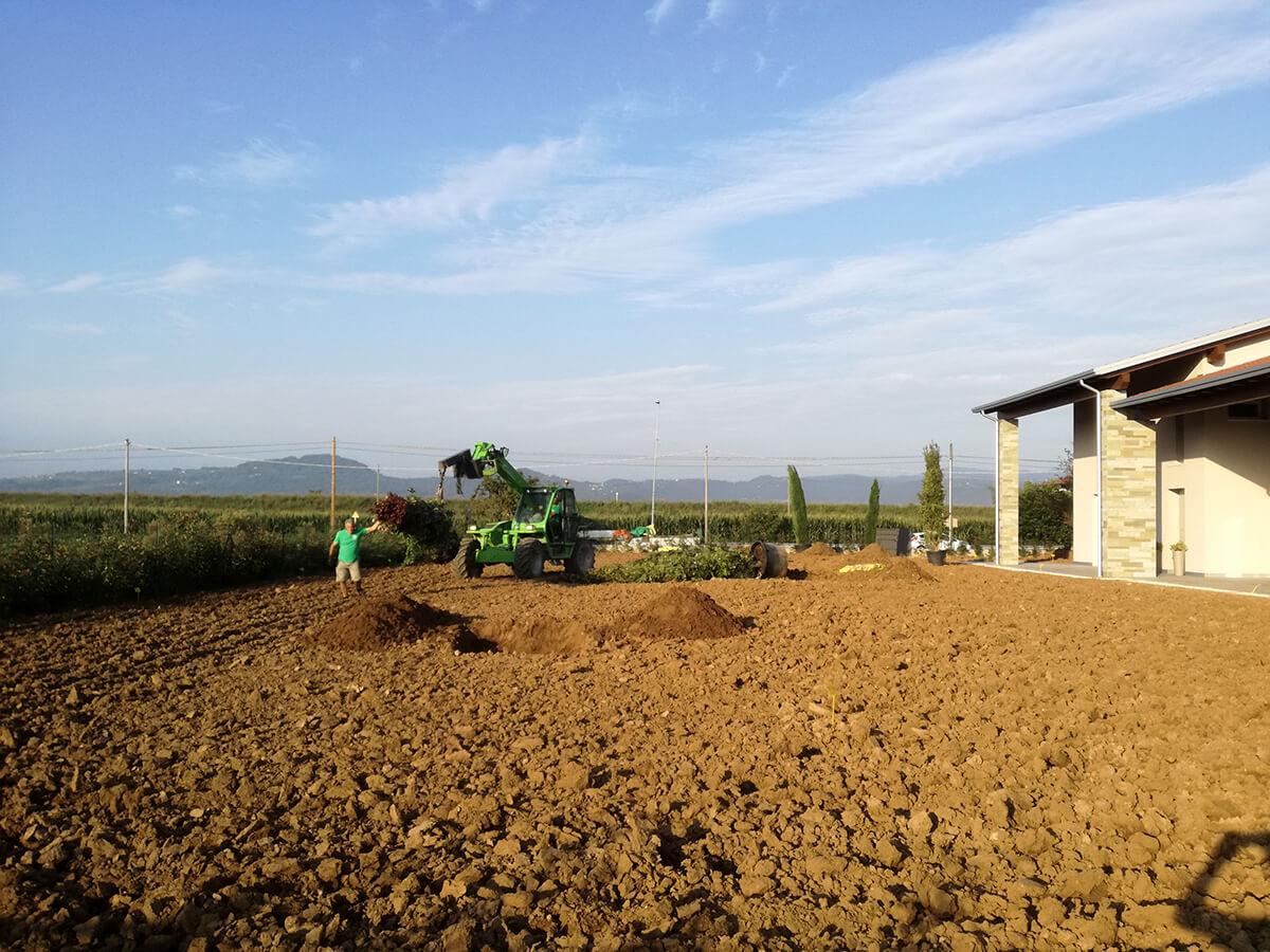 fornitura e posa piante - Verde Blu Giargini - Vicenza 11