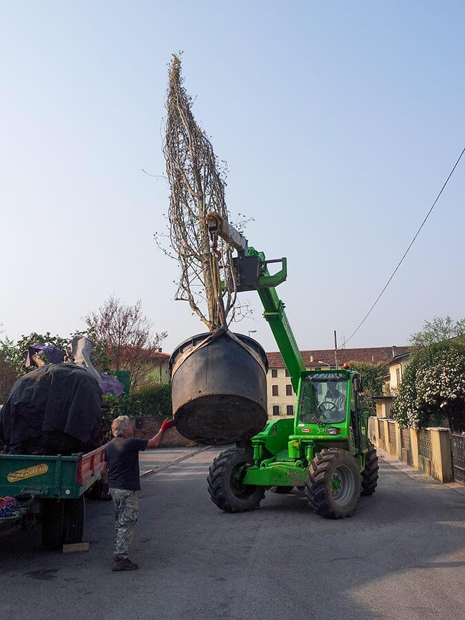 fornitura e posa piante - Verde Blu Giargini - Vicenza 3