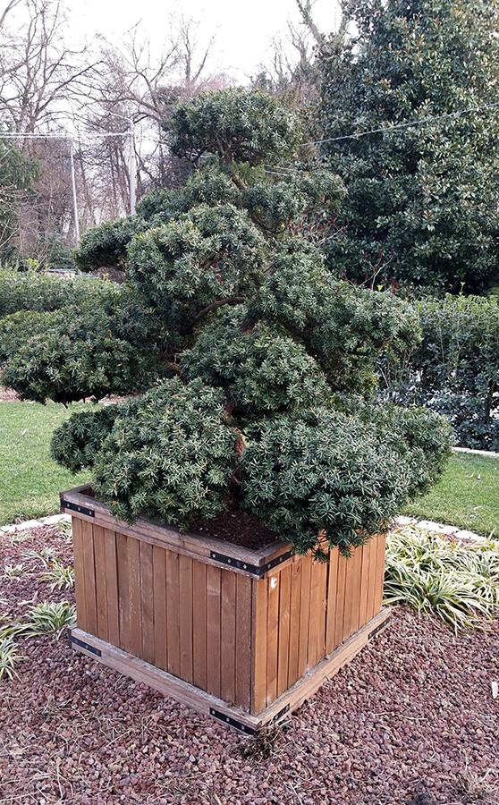 fornitura e posa piante - Verde Blu Giargini - Vicenza 5