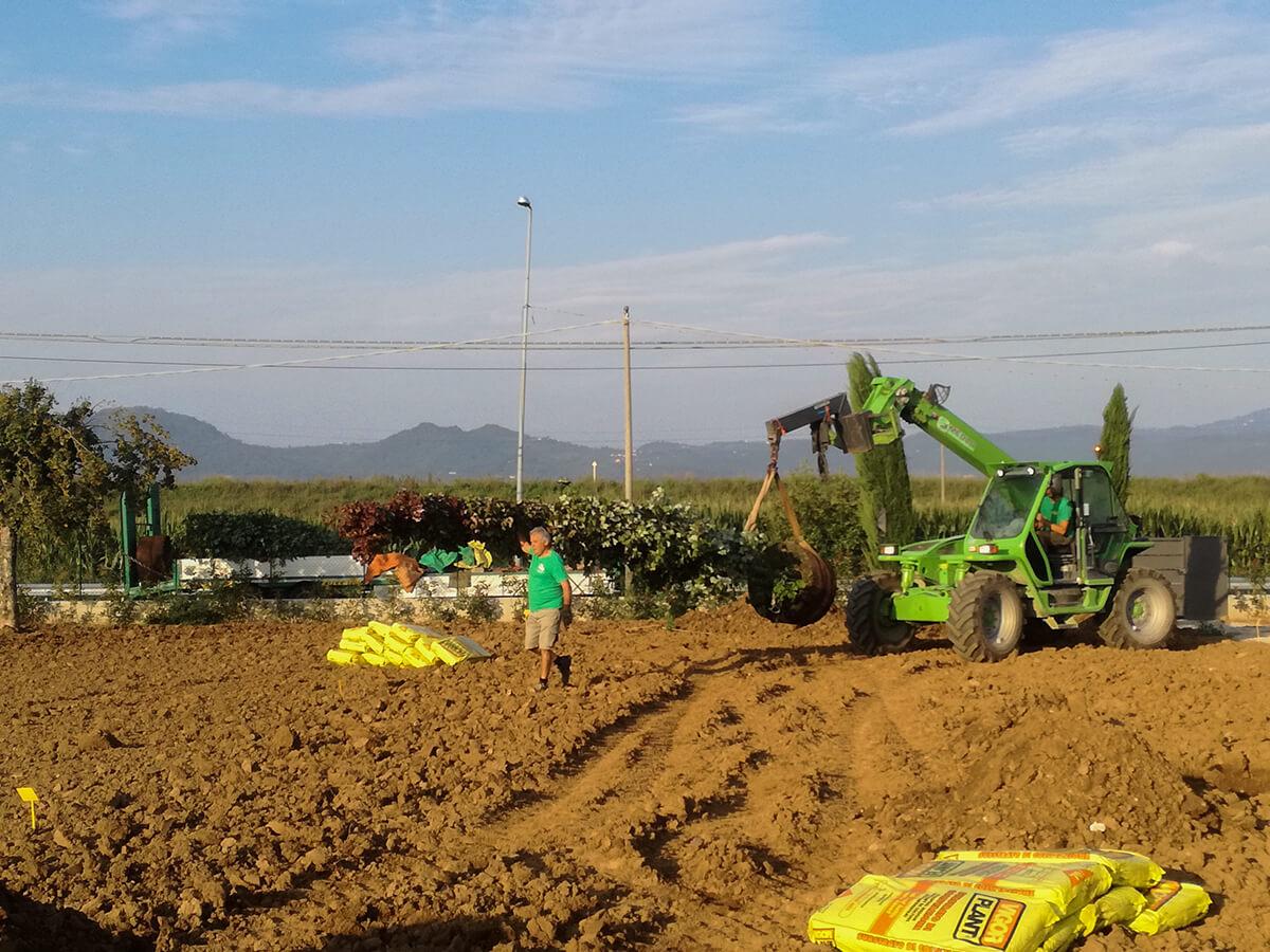 fornitura e posa piante - Verde Blu Giargini - Vicenza 9