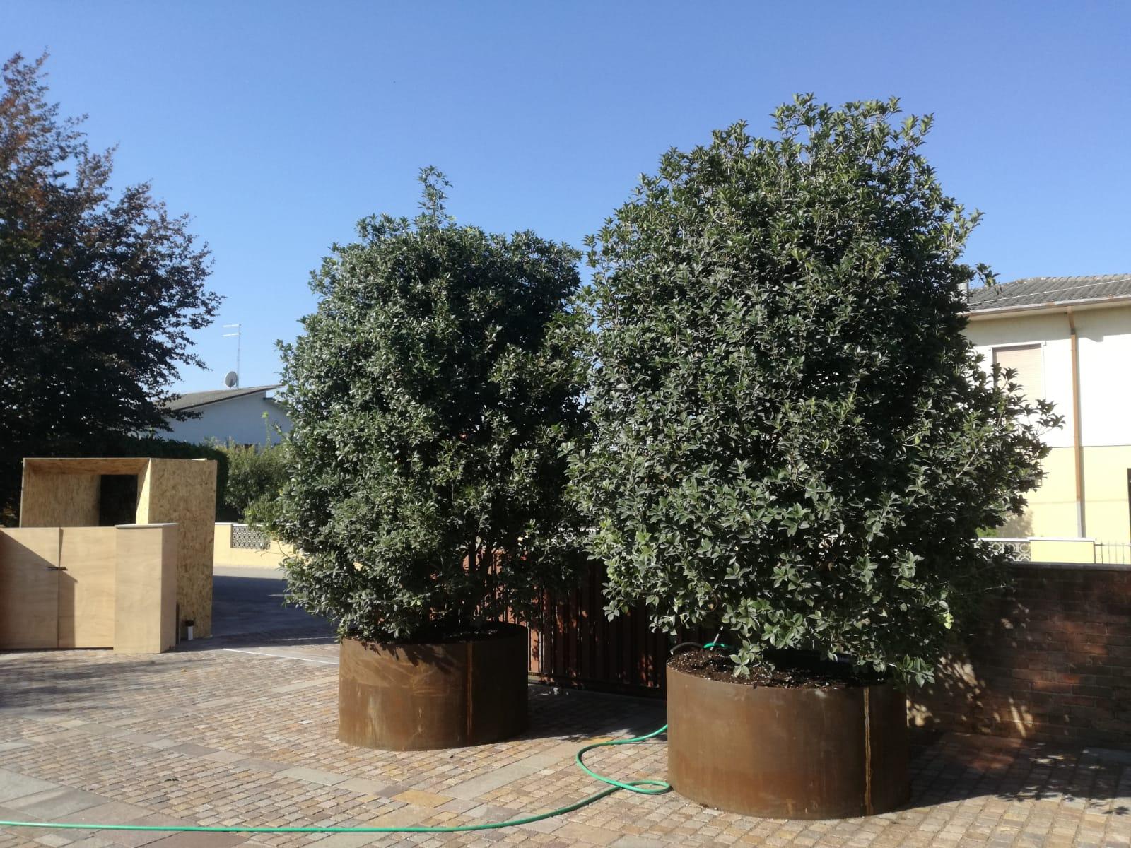 progettazione realizzazione giardini sandrigo - verde blu giardini 13
