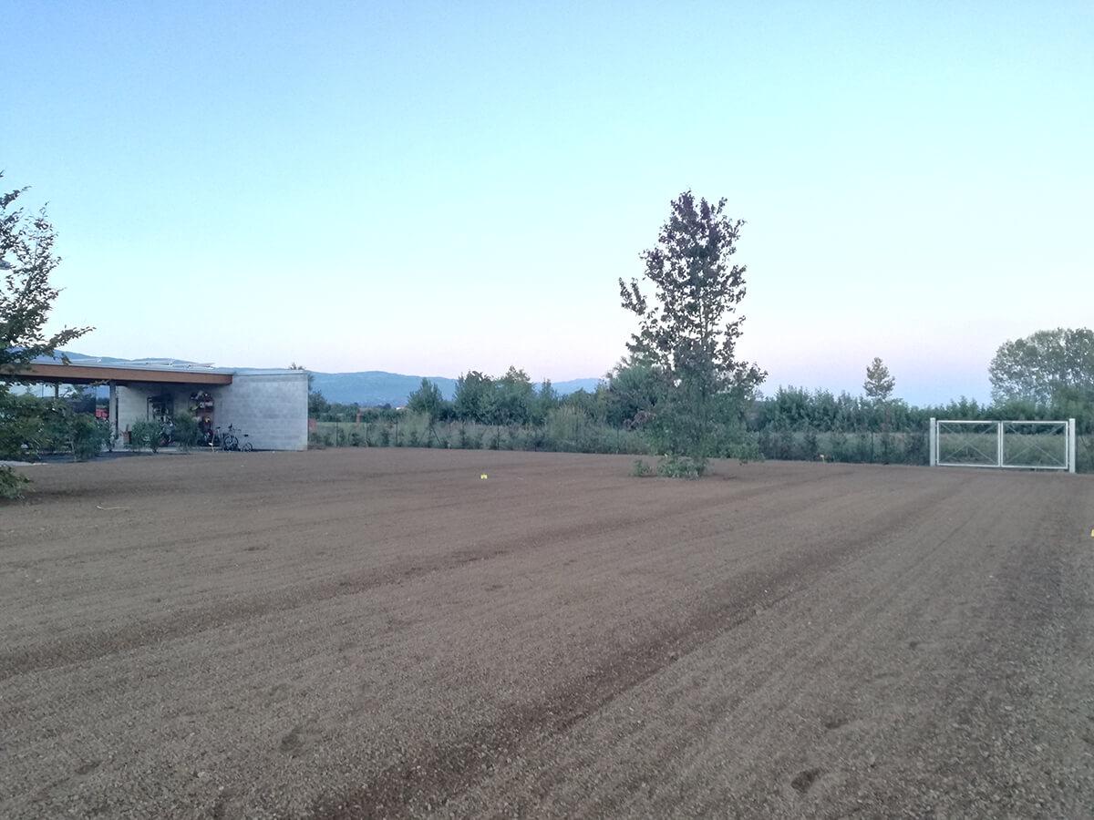 semina e prato in rotolo verde blu 43